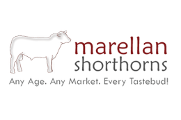 Marellan Shorthorns